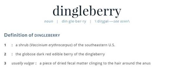 Dingleberry-Definition